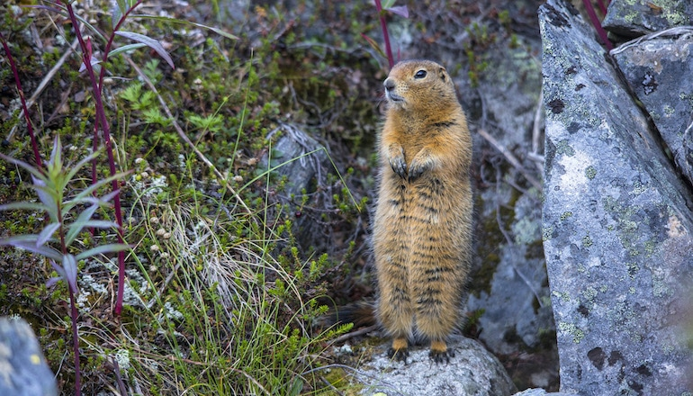 What do squirrels, space travel, and deep-energy retrofits have in common? Hint: it's about powering down