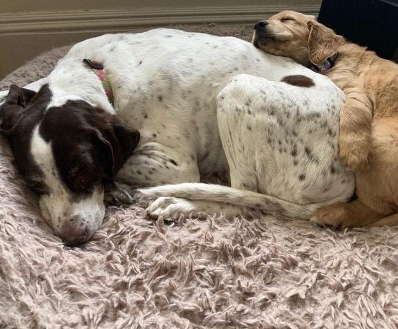 Roxy and Juno